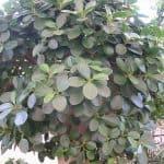 zimmerpflanzen-4