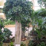 zimmerpflanzen-5