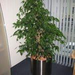 zimmerpflanzen-7