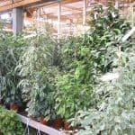 zimmerpflanzen-9